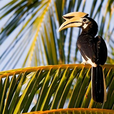 Khao Sok National Park in Thailand has the most species of hornbill than any other area.,six different species in total