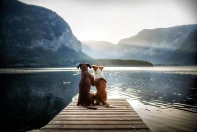 - friendship -