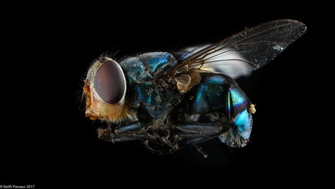 Full Body of Fred the Fly by keithpassaur - Experimental Photography Project