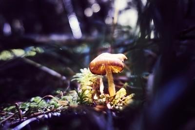 Mystic mushroom