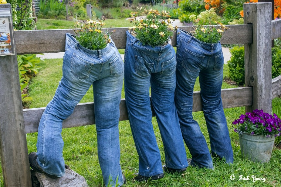 I spotted these Jean's Planters from across the road while looking out the window of the...