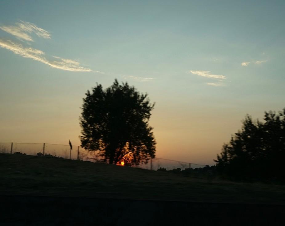 DSC00163 2.  Evening's Joy