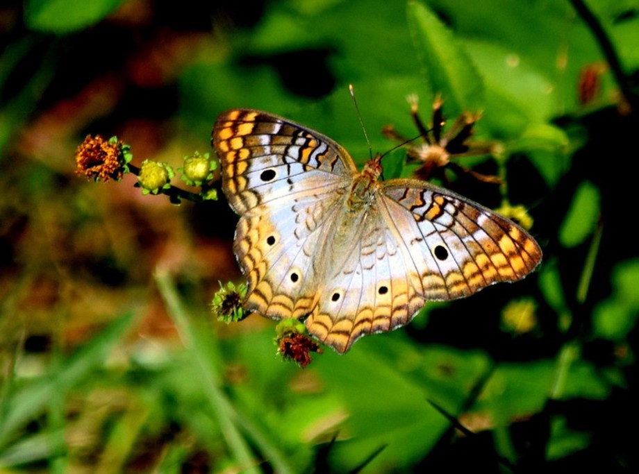 yellow and brown butterfly