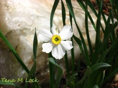 Narcissus and Quartz