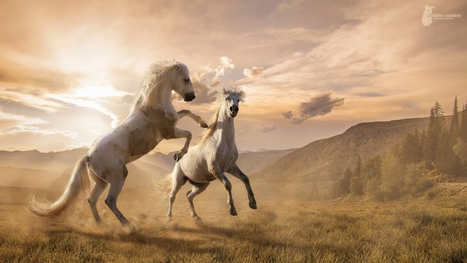 Wild horses by Fotostyle-Schindler - Creative Reality Photo Contest
