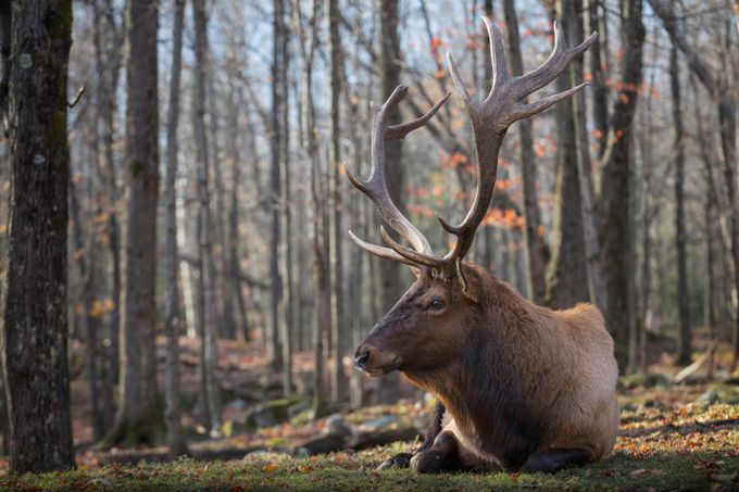 Broken antlers by sandythompson - Monthly Pro Vol 38 Photo Contest