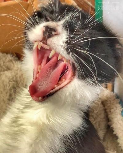 It's hard life being a Mumma cat #blackandwhitecat #catsofinstagram #kittensofinstagram #catandkittens #Hey_ihadtosnapthat #discovertasmania #tasmaniagram #hobartandbeyond #instatassie #tassiepics #tassie #hobart #southerntasmania  #tassiestyle #tasmaniad