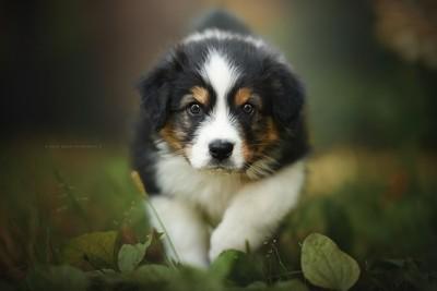 - puppy -