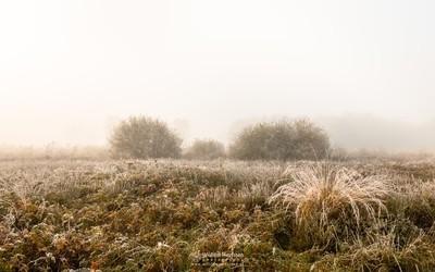 Frosty Autumn Mist