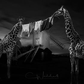 Nocturnal and domesticated Jackie & Jilly the rather shy residents of Jill Windmill hang out their washing to dry at night.  If only this Pho...