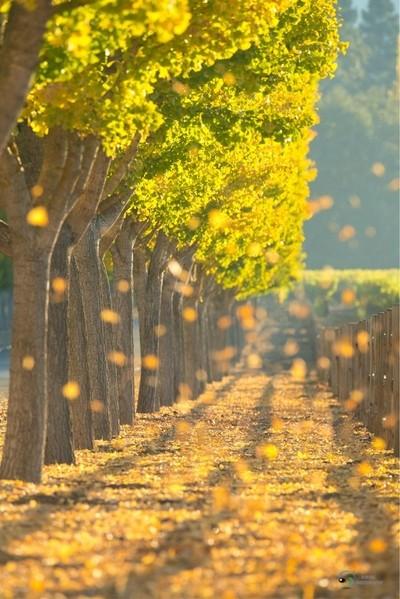 falling leaves bokeh