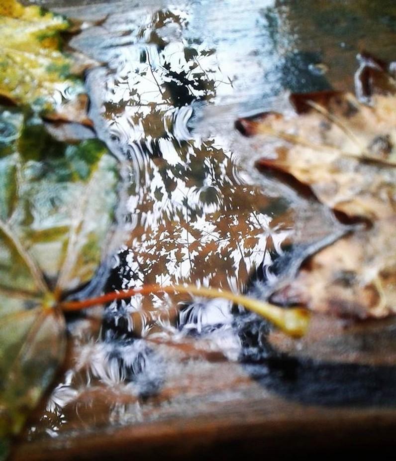 Réflexion sur l'automne  Reflection on autumn  #reflexion #reflection #reflet #distorti...