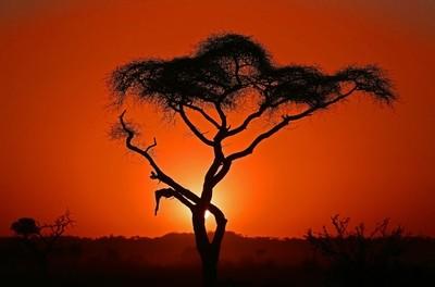 African Sunset1