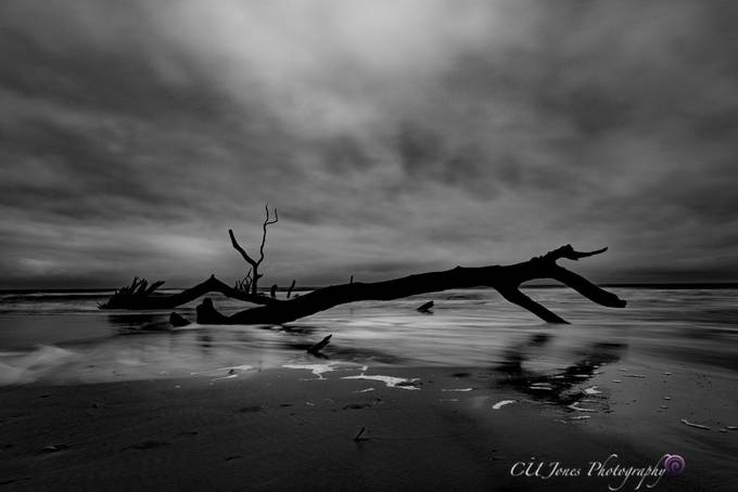 Bulls Island in Awendaw, South Carolina. Went on the ferry for sunrise; the sunrise was as dramatic with the colors but I got some great Black & White. When you are handed lemons you make lemonade. I hope you enjoy.