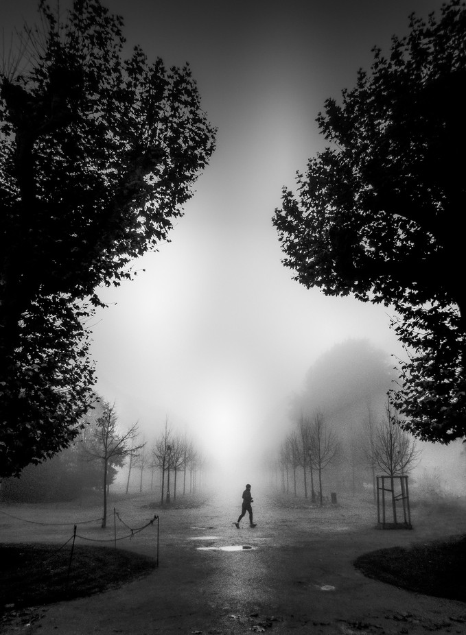 Crossing Paths for 1/60s by peterburu - A Walk In The Mist Photo Contest