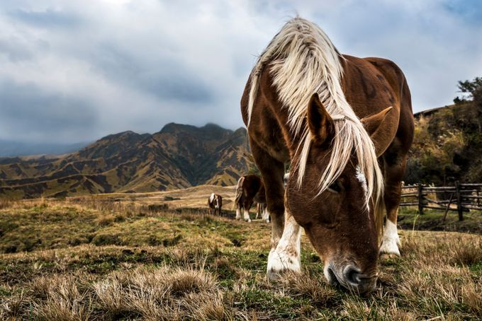 Japanese Horse by Manuelgph - Farms And Barns Animals Photo Contest