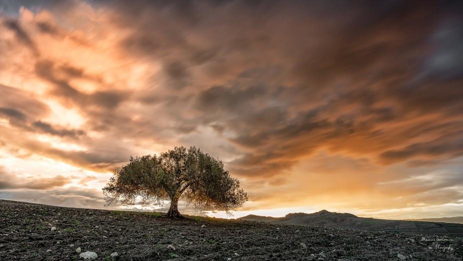 Albero umanizza un paesaggio meglio di quanto farebbe un uomo. (Gilbert Cesbron)
