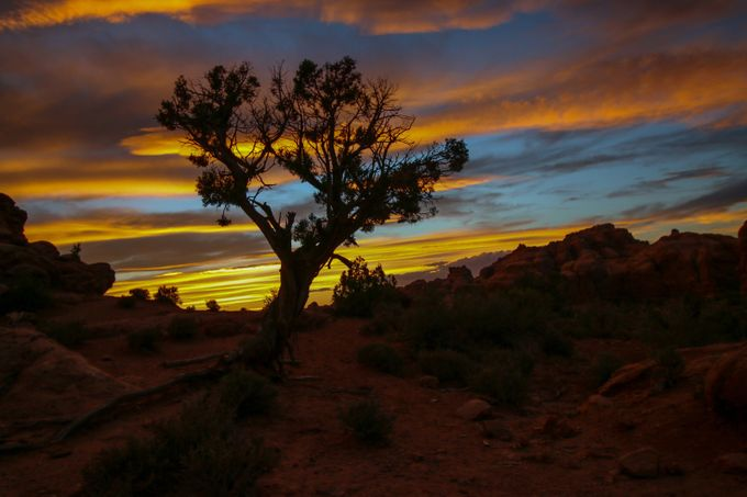 Lonely Tree  by RyanCottamImaging - Tree Silhouettes Photo Contest