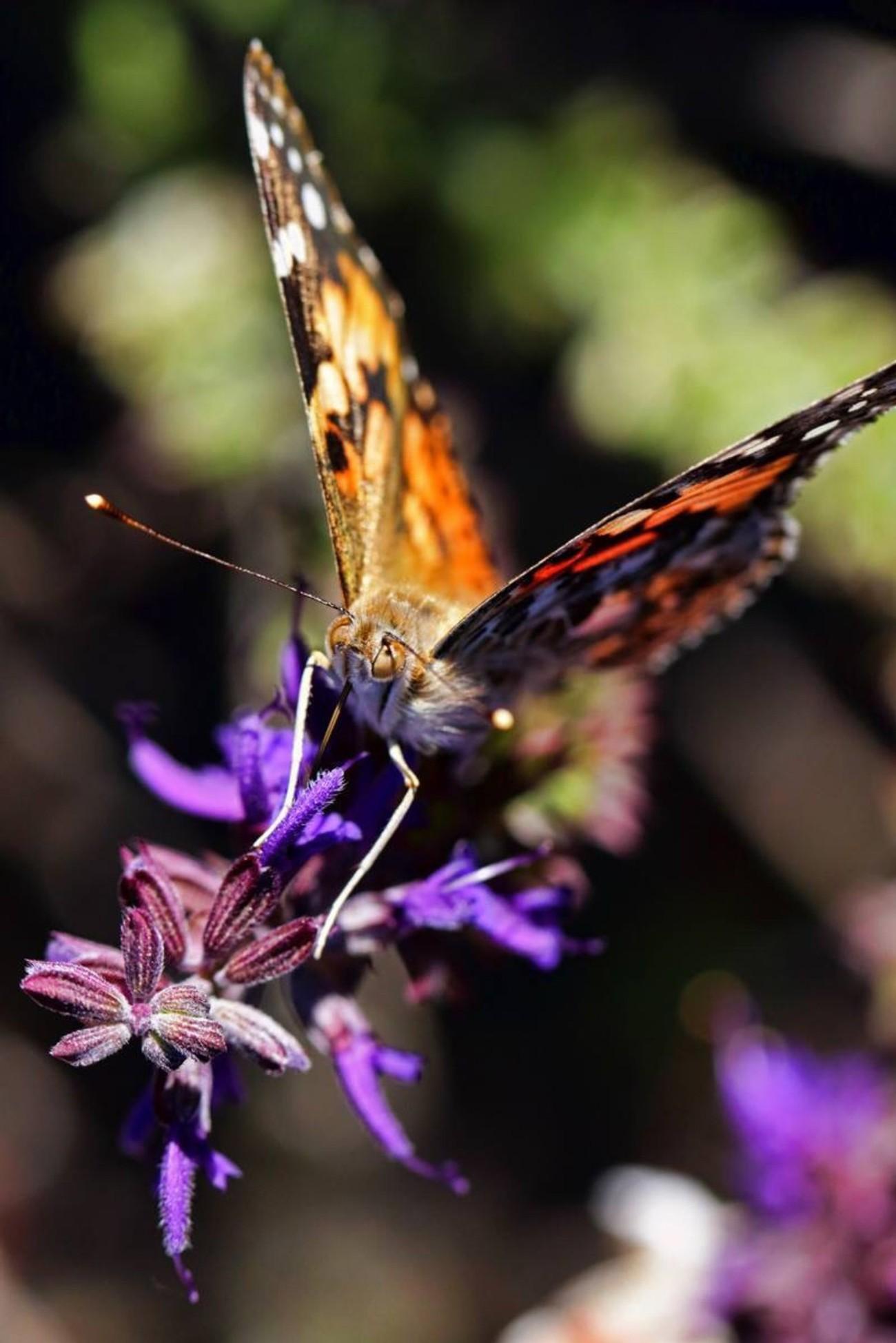 Butterfly, Nebraska