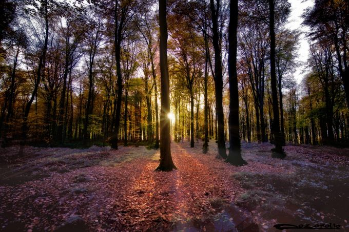 Magic forest in fall by pozofolio - Flares And Glitter Photo Contest