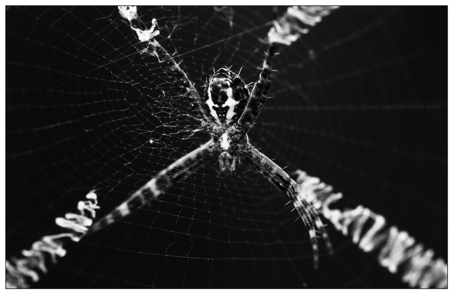 CAUGHT IN THE WEB I found this tiny creature at my balcony. I have noticed interesting thick thre...