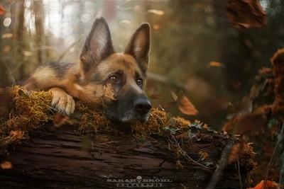 Cora van Theo-Herbots-Fotograaf