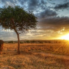 Cant beat the sunsets on an African Safari in Tanzania