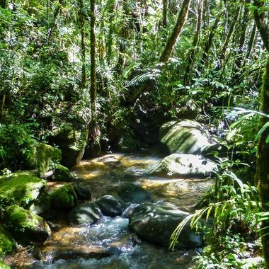 A stream in Borneo rainforest.