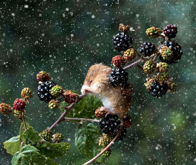 Caught in the Snow flurry by RichardAdams137 - The Cold Winter Photo Contest