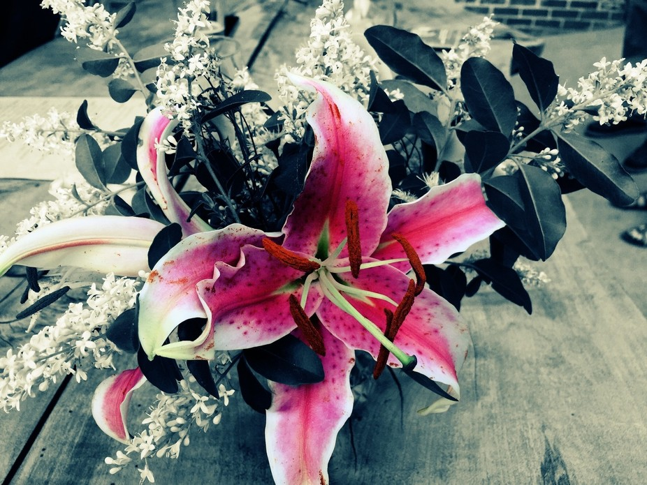 From a dear friend's garden as a gift to me  - photos seem to be the only way to keep fl...