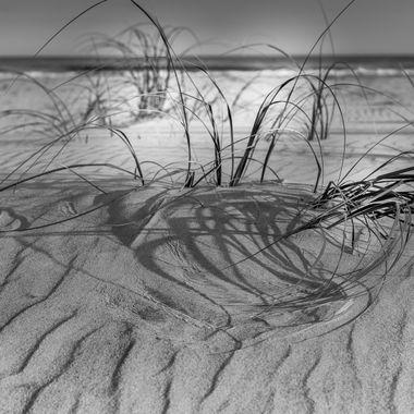 Beach grass on Emerald Isle North Carolina
