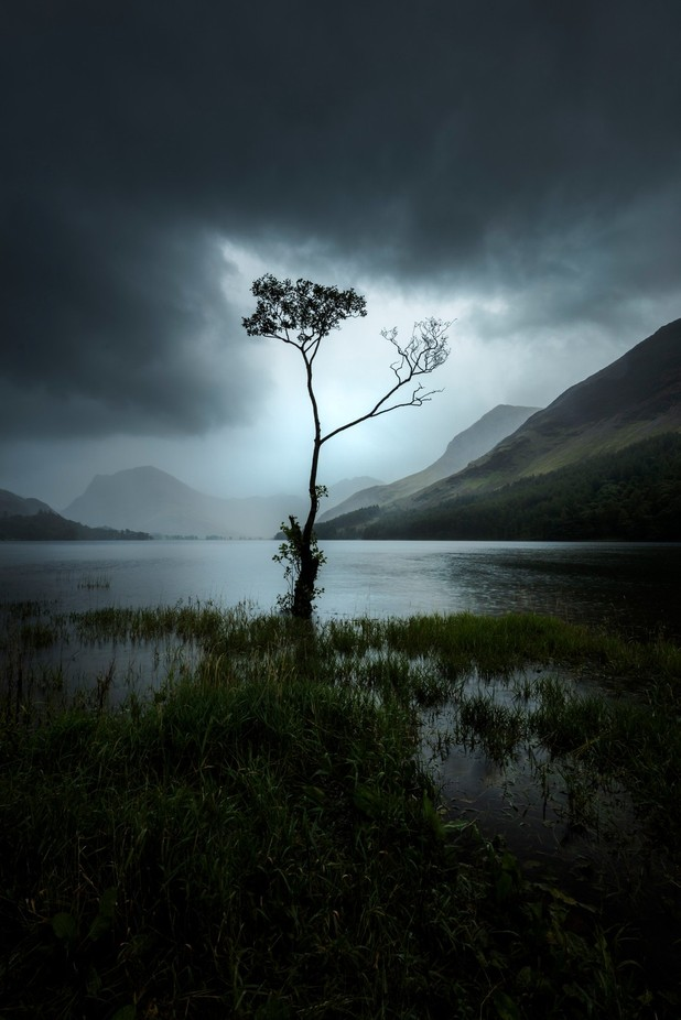 Buttermere Lone Tree by madspeteriversen - Tree Silhouettes Photo Contest