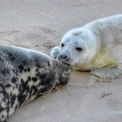 I love you Mummy ????  Melts my heart ❣ unconditional love ????  Nature is beautiful ????❤️ #sealpup  #seals  #sealcolony  #motherandbaby  #mammals  #mammalsofinstagram  #babyanimals  #babyseal  #unconditionallove  #meltsmyheart  #amazingnature  #natureis