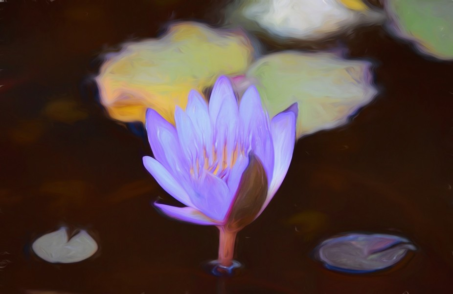 Purple Water Lily - Painting Impression