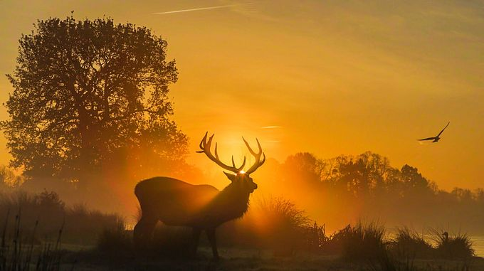 Sunrise silhouettes by David_Photos_UK - Social Exposure Photo Contest Vol 12