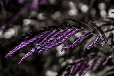 purplesimplycity