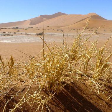 View in Sossusvlei desert, Namibia.
