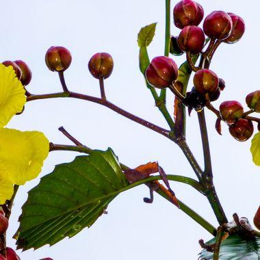 Wild plant in Borneo rain forest.