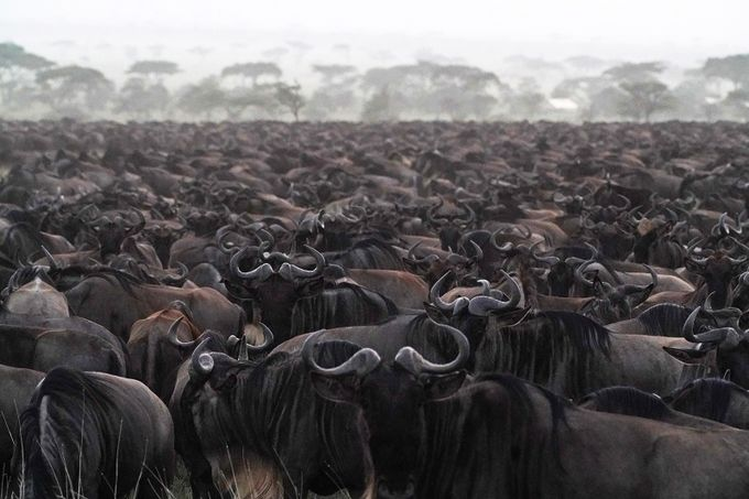 """The Northern Migration"" by SunBear22222 - Explore Africa Photo Contest"