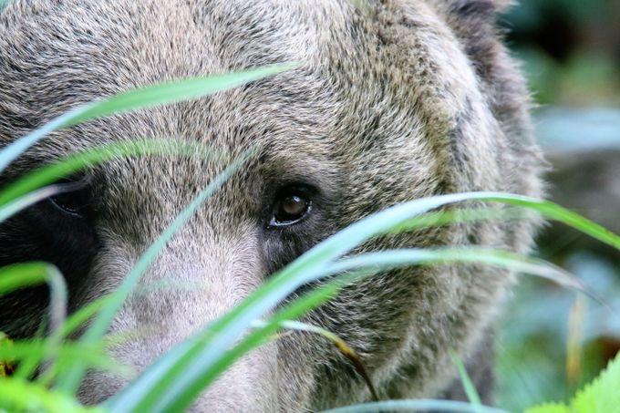 bears eye view  by martynbennett - Big Mammals Photo Contest