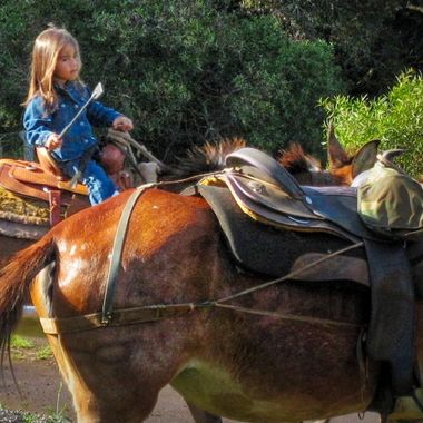Getting the mules organized for a ride down the Kaulapapa trail on the island of Molokai, Hawaii.