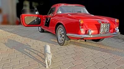 My wonderful 1962 Alfa Romeo !