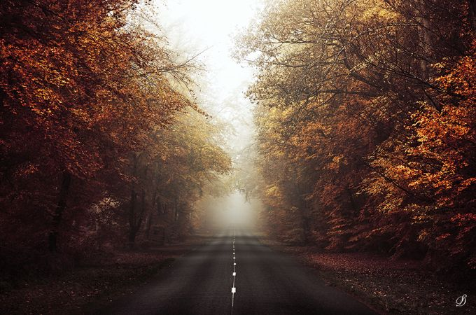 Fall road by StephaneDroal - Monthly Pro Vol 38 Photo Contest