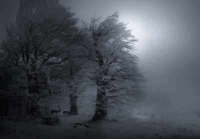 In the icy fog
