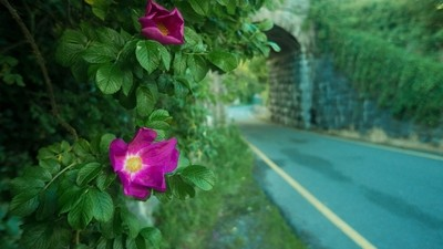 Iron Walkway Flower
