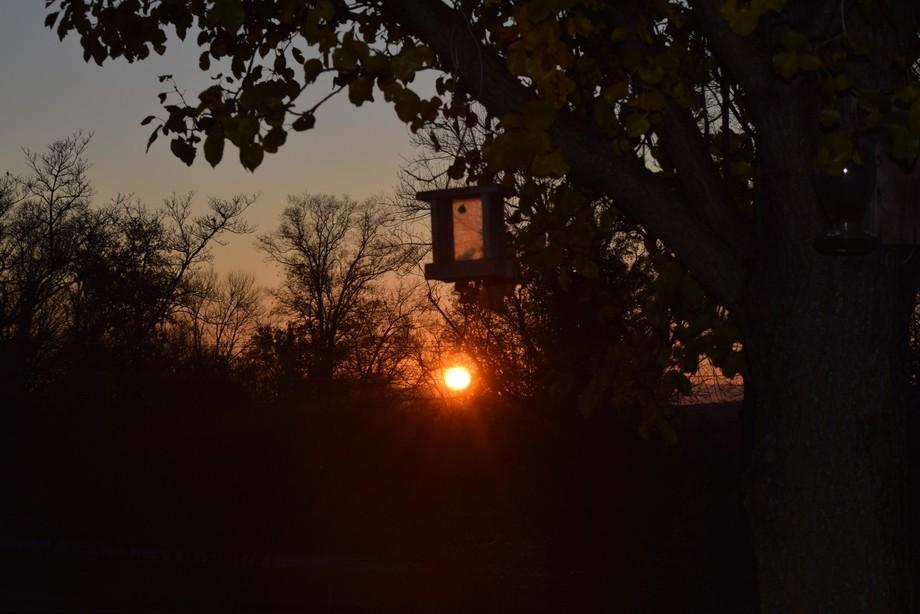 Sunset behind bird feeder