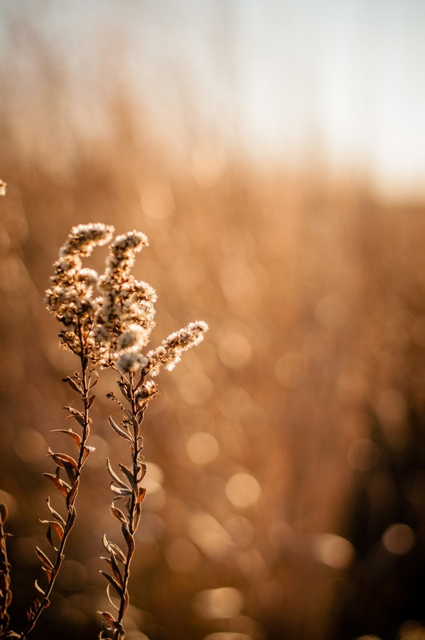 Golden Nature by AngieMarie79 - Depth In Nature Photo Contest