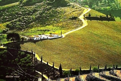 Portugal vineyards of the Douro