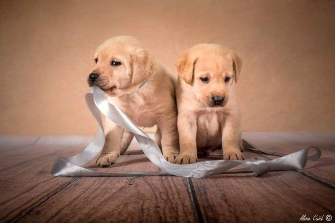oh puppy by alinecaid - Kittens vs Puppies Photo Contest