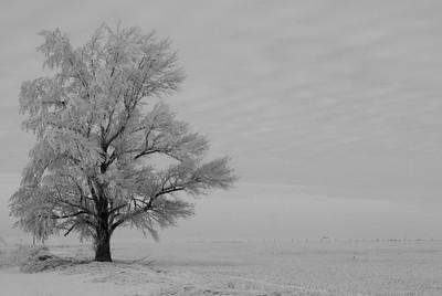 Frosty Lone Tree - B&W